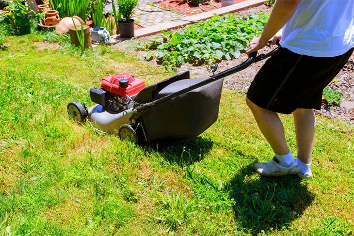 best lawn mower with a roller