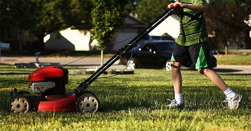 How to Pick The Best Petrol Lawnmower: Everything You Need To Know