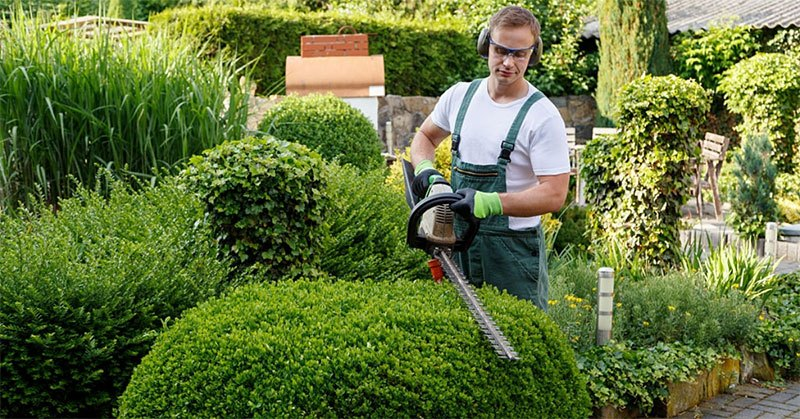 Top 5 List of the Best Hedge Trimmer for Thick Branches