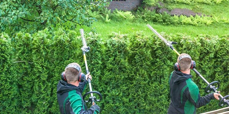 best long reach hedge trimmer
