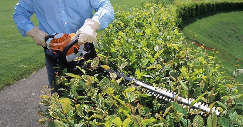 choosing the best lightweight hedge trimmer for your needs