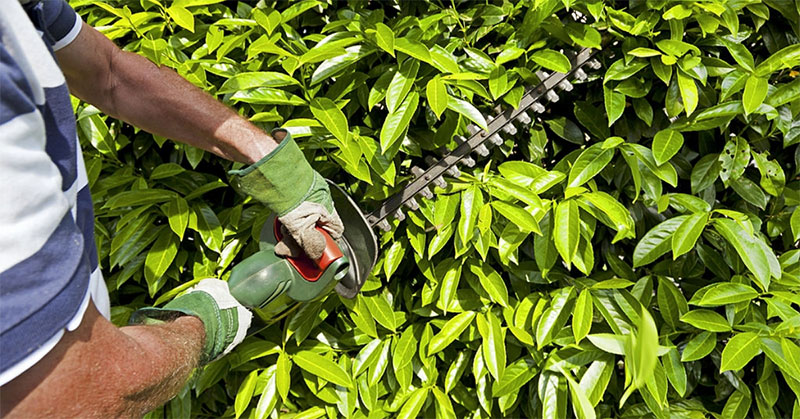 How to Make a Perfect Choice When It Comes to Buying the Best Electric Hedge Trimmer