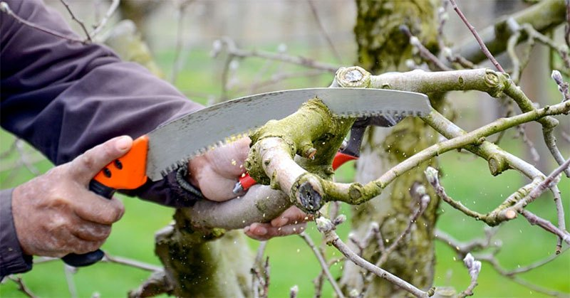 Why You Should Invest in the Best Pruning Saw – Ultimate Review