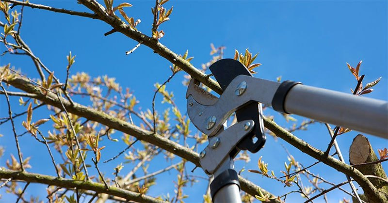 Cut Branches With Ease With the Best Loppers