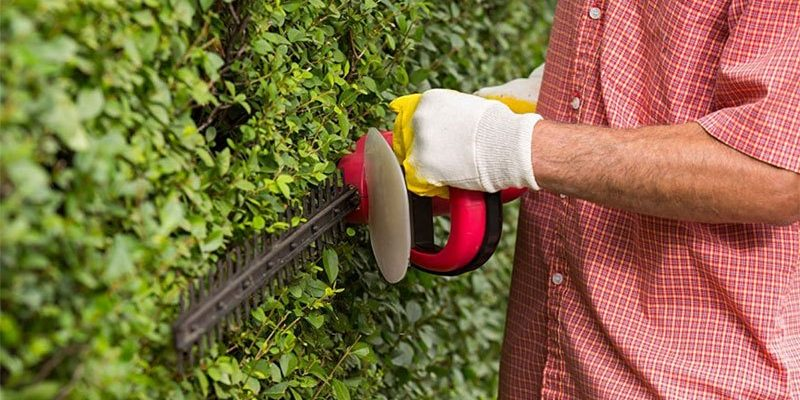 best brush cutter for brambles