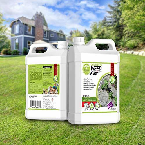 best moss killer for grass