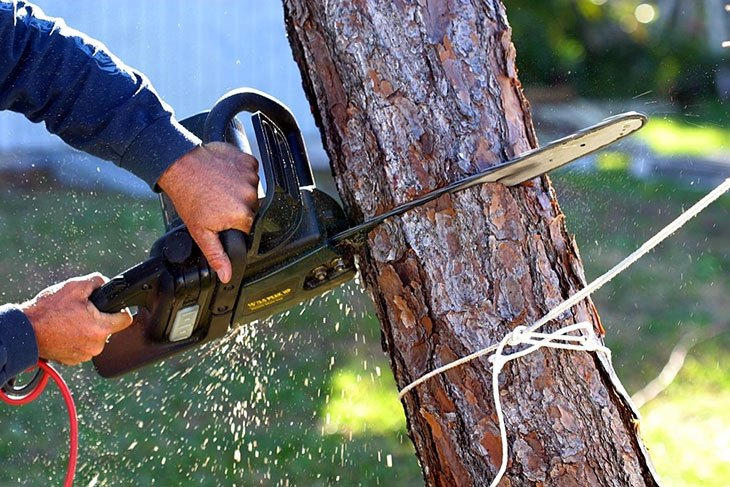 the best cordless electric chainsaw
